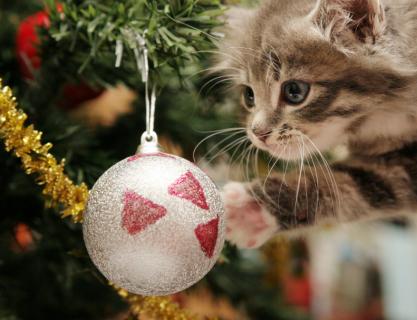 Immagini Natale Con Gatti.I Gatti E L Albero Di Natale