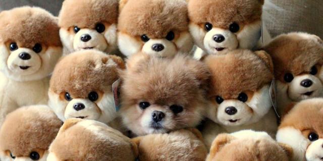 Trova l'Intruso: 32 Animali che si Mimetizzano alla Perfezione!