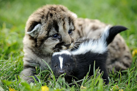 Amicizie Inusuali nel Mondo Animale