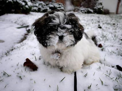 Cuccioli Di Animale Che Vedono La Neve Per La Prima Volta