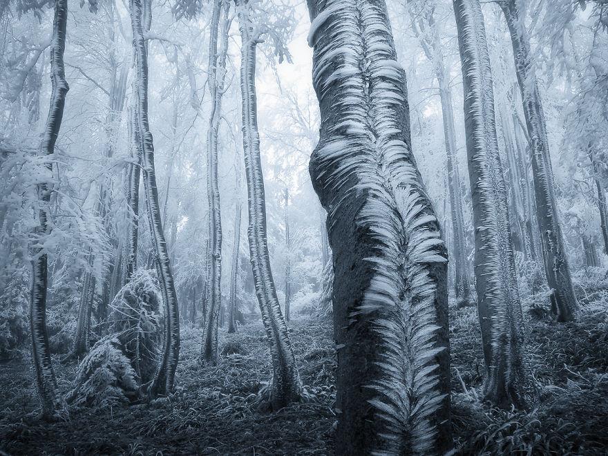 Incredibili Opere d'Arte Naturali di Ghiaccio e Neve