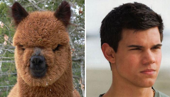 Trova le Differenze: 26 Animali che Assomigliano Incredibilmente a dei VIP
