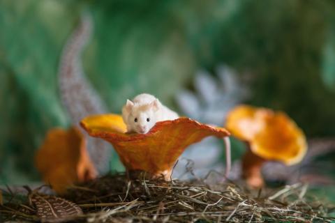 Animali Salvati dai Laboratori Diventano Modelli per Alice nel Paese delle Meraviglie