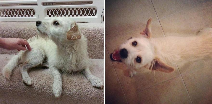Gli Animali Prima e Dopo l'Adozione: Come Cambia la loro Espressione