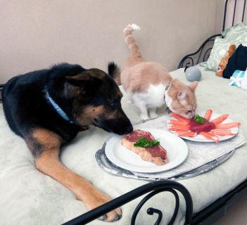 15 Gatti che se la Spassano più di te... Vedere per Credere!