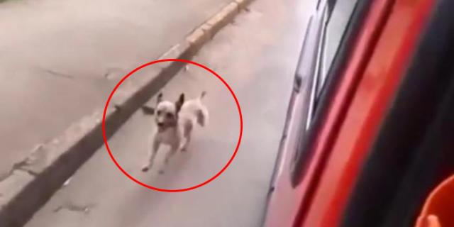 Cane Rincorre Senza Sosta un Ambulanza: Dentro c'è il Suo Padrone!