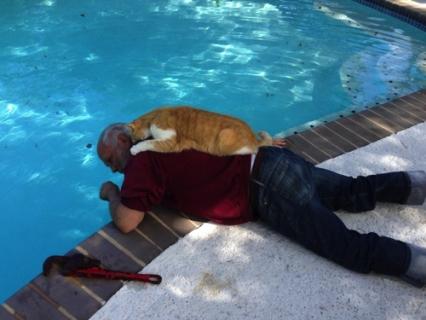 30 Immagini Che Dimostrano il Vero Amore dei Gatti