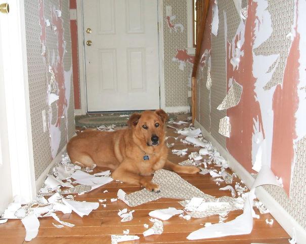 Non solo gli Uomini... a volte anche i Cani possono essere Str****