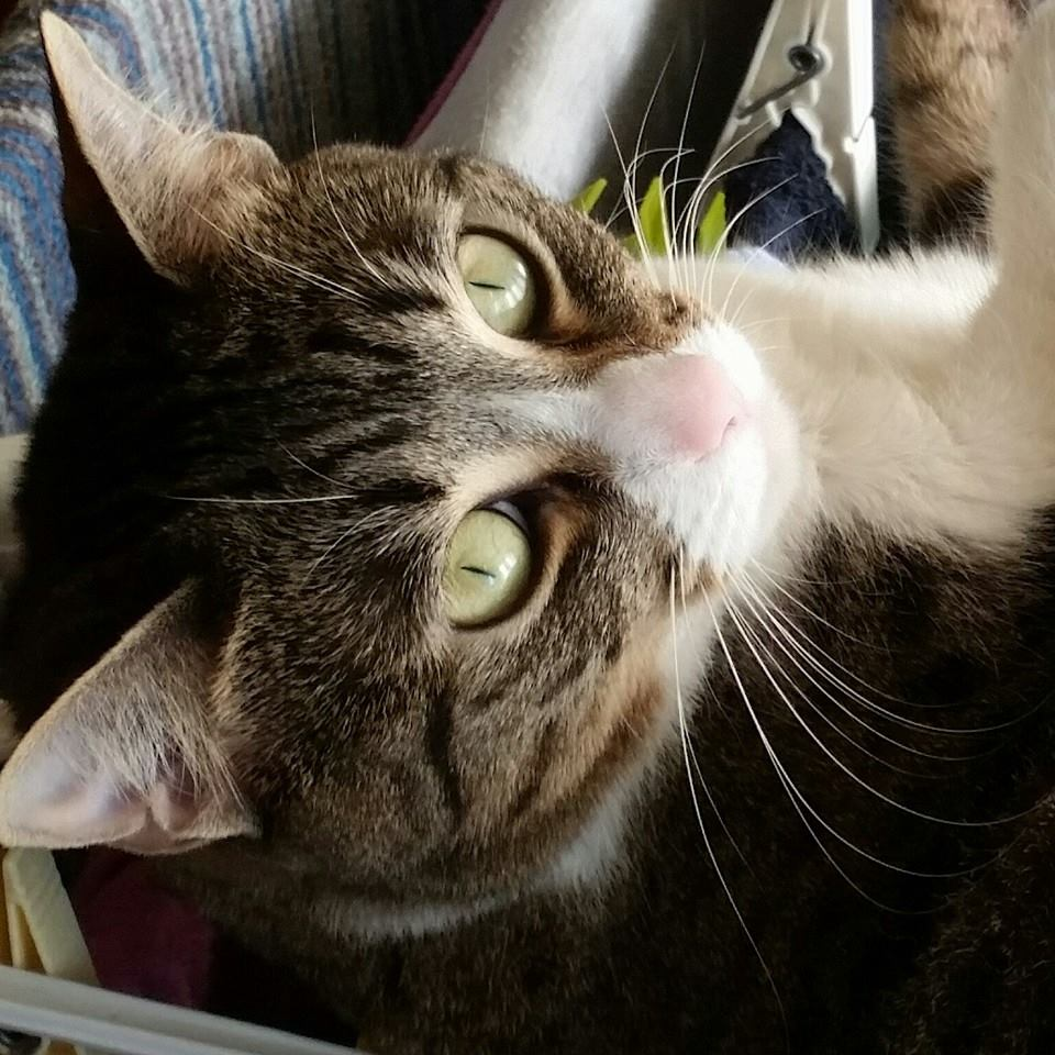 Festa del Gatto: ecco le Foto dei vostri Gatti che ci avete inviato