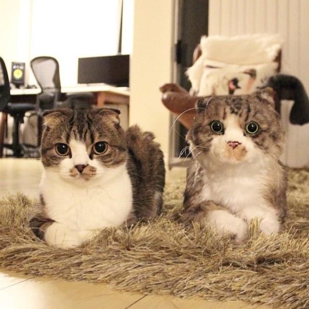 L'Azienda che Realizza il Clone di Peluche del tuo Gatto o Cane