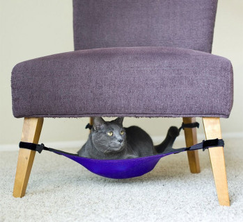 34 Cucce Insolite per i vostri Gatti che Vorrete Assolutamente Avere