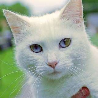 Che Occhi! Dal Gufo al Gattino: 15 Animali con gli Occhi di Colore Diverso