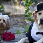 Pete & Tally: Anche i Cani si Sposano