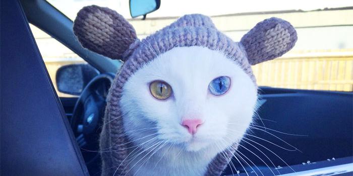 Che occhi dal gufo al gattino 15 animali con gli occhi di colore diverso roba da donne - Occhi colori diversi ...