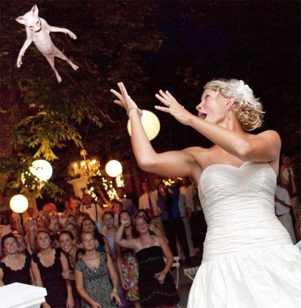 La folle Gallery di Spose che Sostituiscono il Bouquet con un Gatto