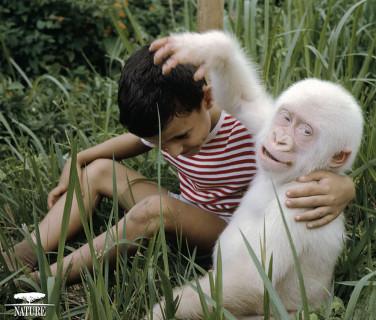21 Animali Albini che Non Potrai Credere Esistano