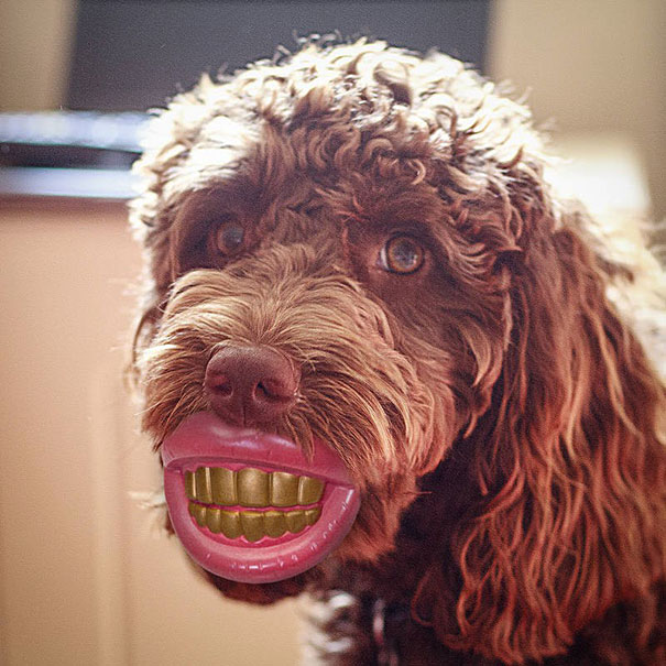 Cani che Non si Rendono Conto di Essere Ridicoli con quei Giocattoli