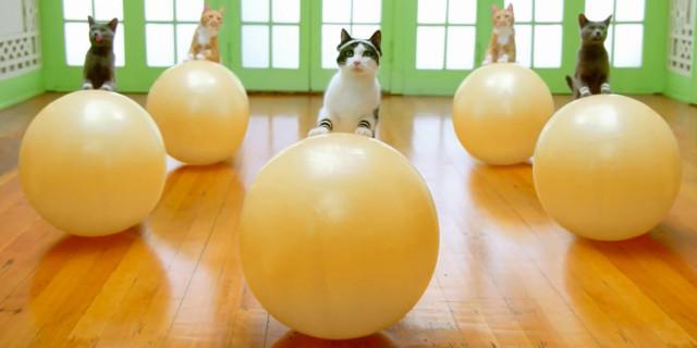 Gatti che Fanno Fitness