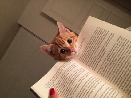 Gatti che Non Hanno Nessuna Intenzione di Farti Leggere
