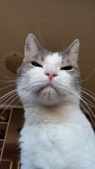 25 Foto che Provano che il tuo Gatto vorrebbe Ucciderti