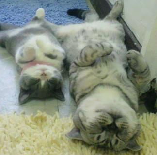 """15 Adorabili Gatti con la loro copia in """"miniatura"""""""