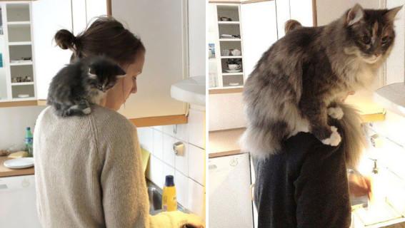 Piccoli Gatti Crescono: le foto Prima e Dopo di cuccioli diventati grandi