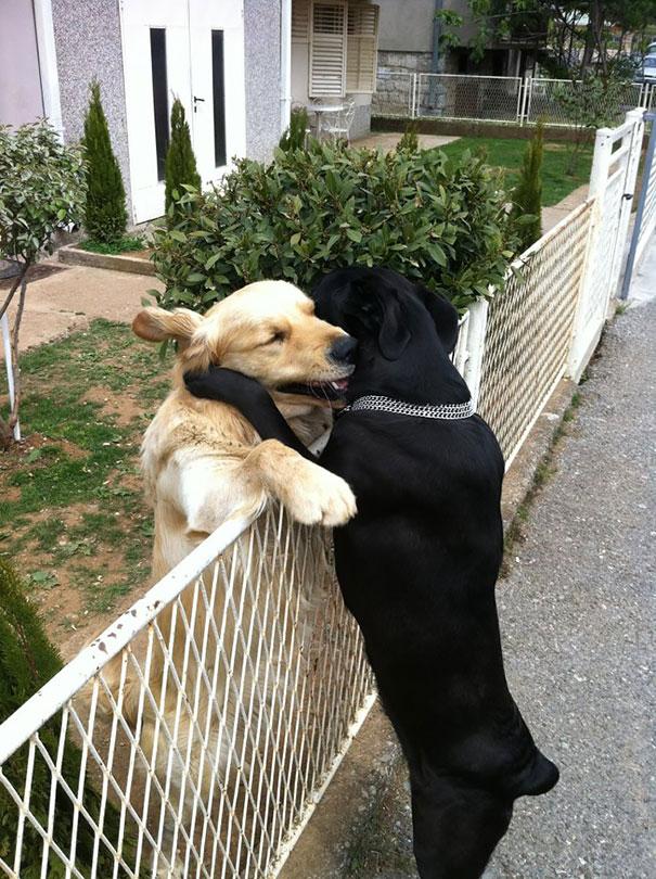 20 Cani Inseparabili che Non Riescono a Stare Lontani l'uno dall'altro