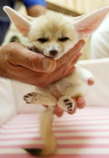 Nel Palmo di una Mano: Foto di Cuccioli che vi Faranno Sciogliere il Cuore