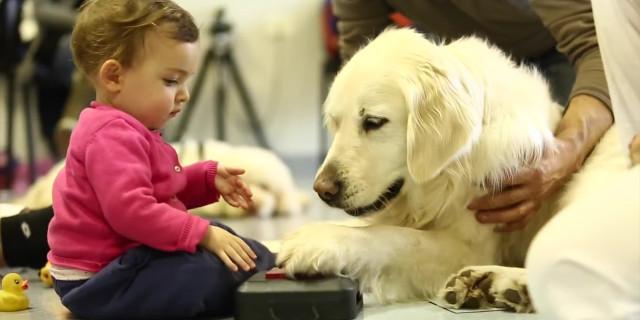 Pet Therapy, i Cani che Aiutano i Bambini Malati: ecco il Commovente Video