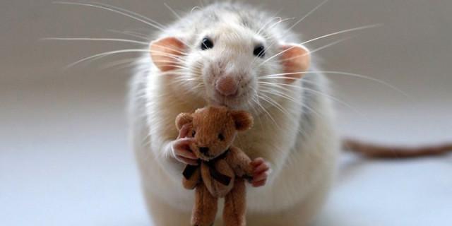 Paura dei Topi? Forse queste Foto vi faranno Ricredere!
