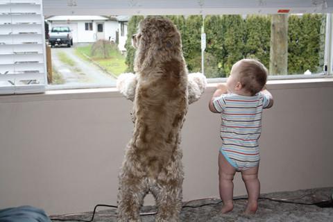 I Migliori Baby Sitter al Mondo? Sono i Cani, Eccone la Prova!