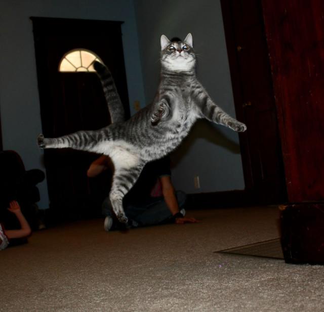 Gatti che Saltano e Volano in Aria Come dei Veri Ninja
