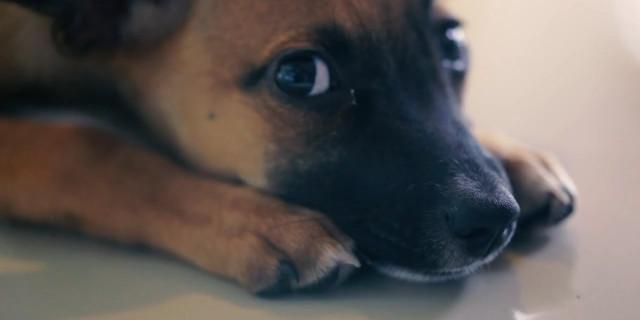 Negozio di Animali Sostituisce i Cani di Razza con quelli Randagi: Ecco le Reazioni