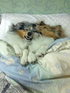 20 Cani Assonnati che non Ti lasceranno Dormire nel Tuo Letto Stasera