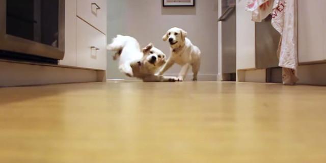 """""""È l'Ora della Pappa!"""": Ecco Questi Due Cuccioli Come Corrono Verso la Ciotola"""