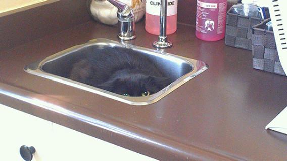 Le Buffe Reazioni dei Gatti che Hanno Paura del Veterinario!