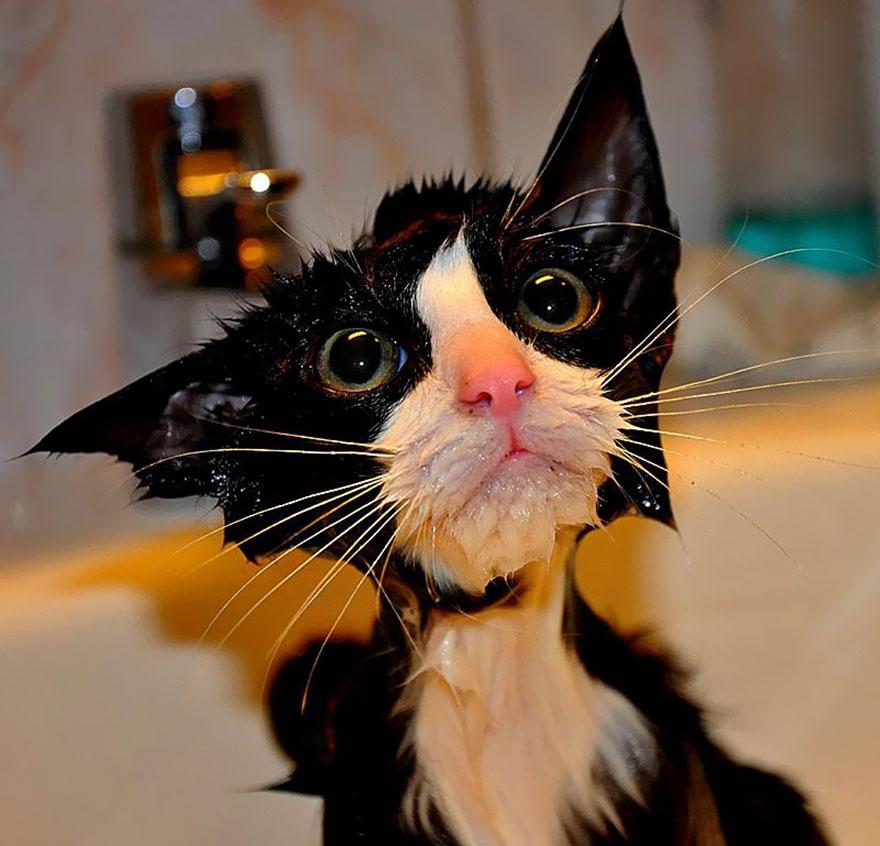 22 foto ironiche e divertenti non per loro di gatti - Cucina casalinga per gatti ...