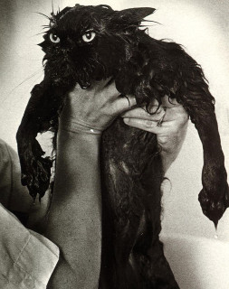 22 Foto Ironiche e Divertenti (non per loro) di Gatti durante il... Bagnetto