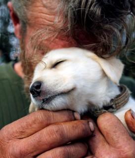 20 foto di cani fedeli a fianco dei padroni nel momento del bisogno
