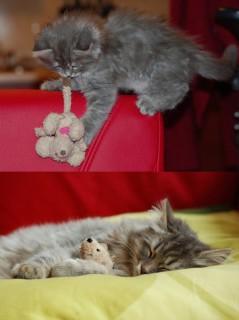 20 Teneri Animali che Non Riescono a Separarsi dai Giochi d'Infanzia