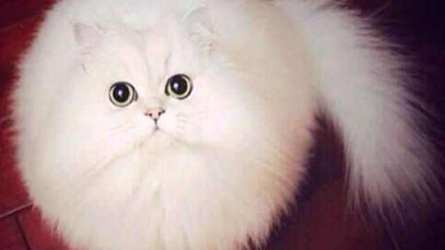 """I 24 Gatti Più """"Soffici"""" al Mondo che Vorrete subito Riempire di Coccole"""