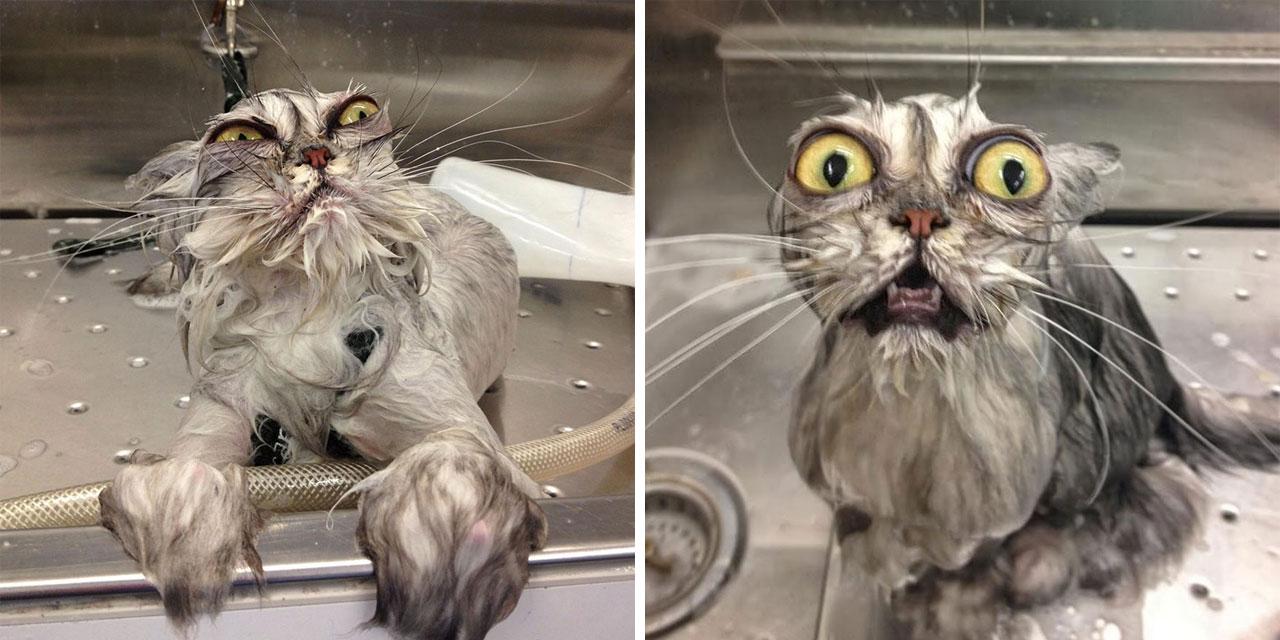 22 foto ironiche e divertenti non per loro di gatti for Cani che non vogliono fare il bagno