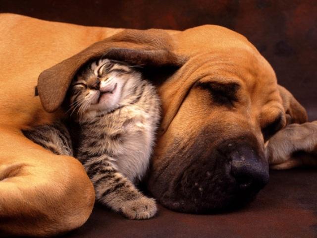Queste 20 Foto di Gatti che Sorridono vi Miglioreranno la Giornata