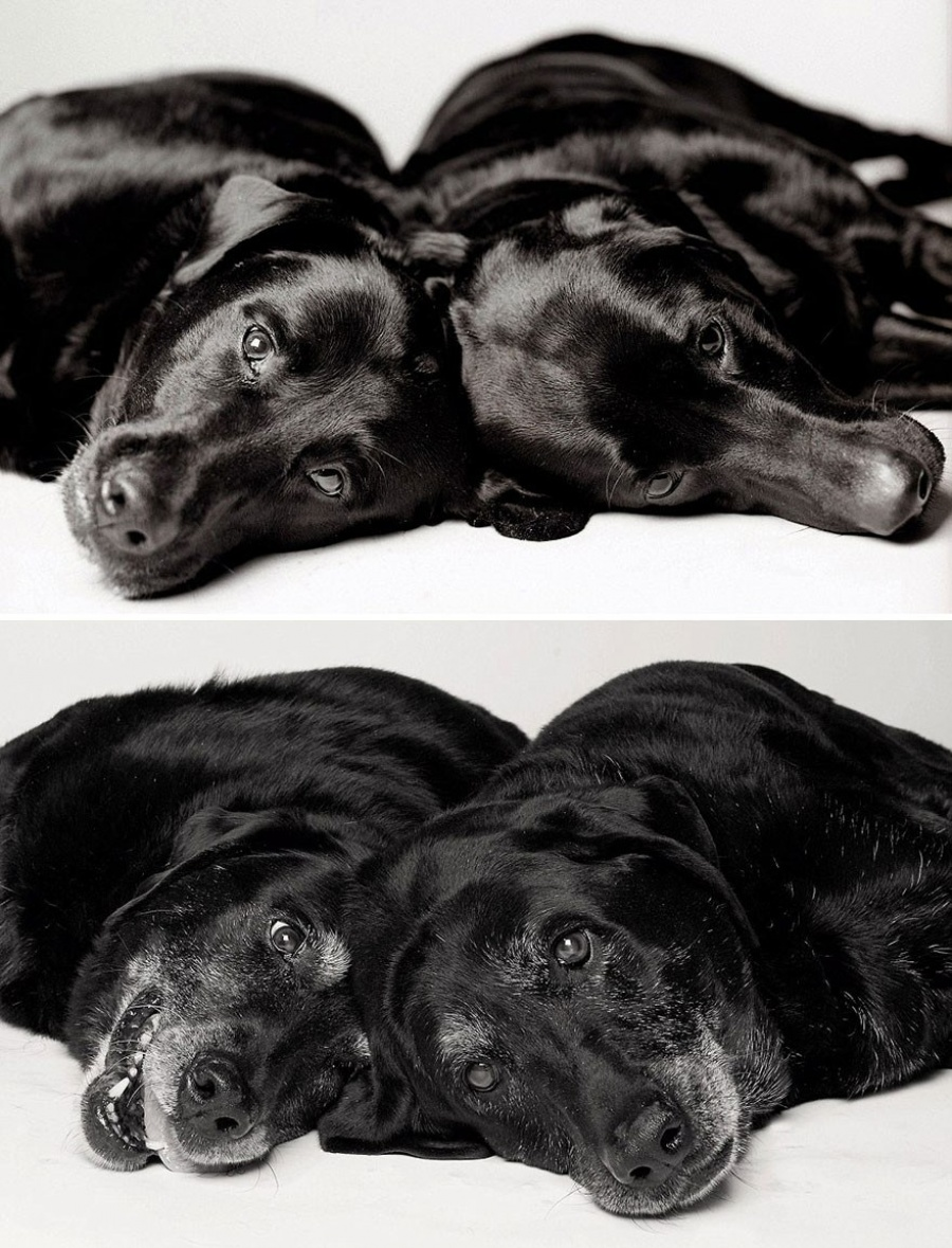 13 Commoventi Fotografie che Mostrano Come Invecchiano i Nostri Cani