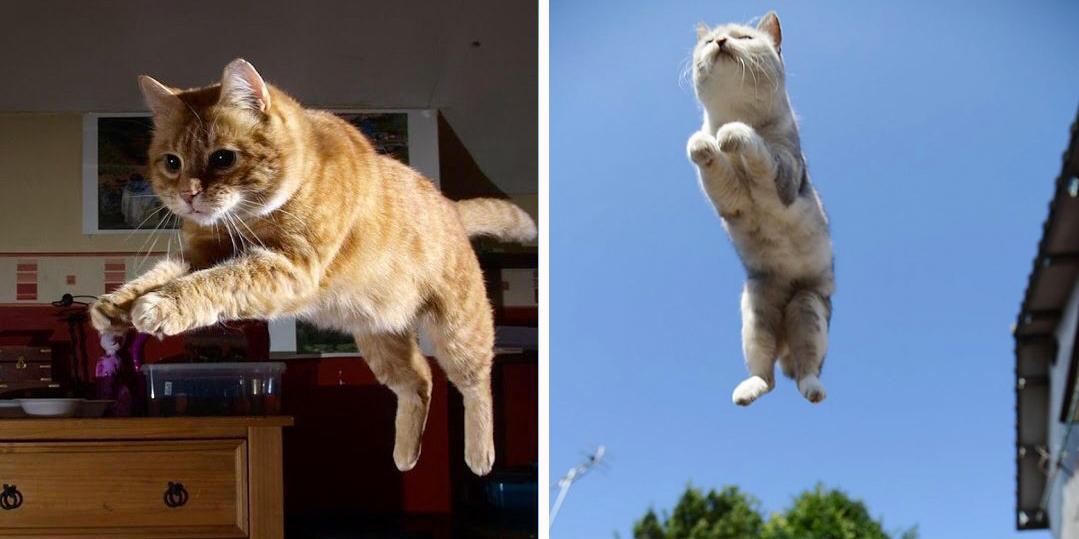I gatti volano questi 25 felini s ecco come sfidano la - Cucina casalinga per gatti ...