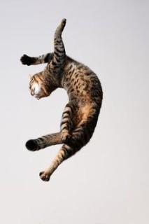 I Gatti Volano? Questi 25 Felini Sì, Ecco Come Sfidano la Forza di Gravità