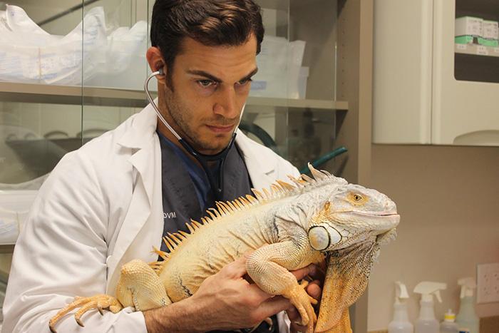 Evan Antin, è Lui il Veterinario Più Sexy del Mondo. Ecco le Foto!
