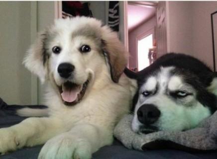 20 Buffe Espressioni di Cani che si Comportano in Modo Assurdo!
