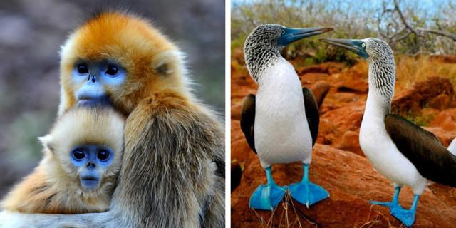 15 Incredibili Animali che Non Credevi Esistessero in Natura