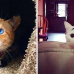 """13 Meravigliosi Gatti che Sembrano Essere Stati Dipinti """"dalla Natura"""""""